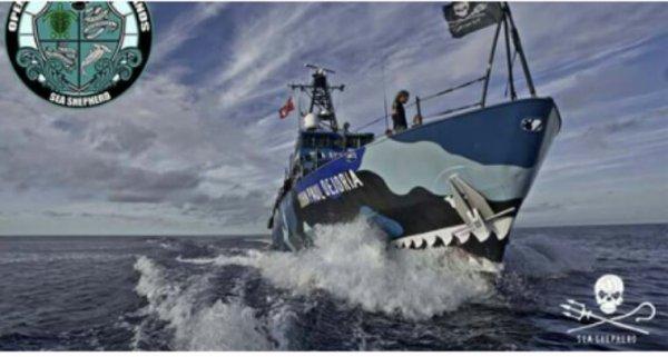 Actualité Sea shepherd :pêche illégale Costa Rica