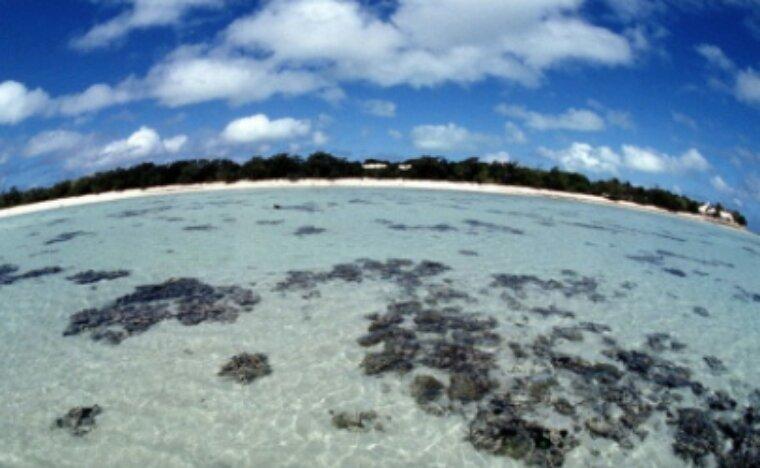 Grande barrière de corail: l'impact dublanchissement plus graveque prévu