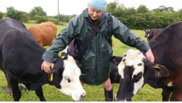 Cet éleveur ne supportait plus d'envoyer ses animaux à l'abattoir. Il a donné son troupeau à un sanctuaire