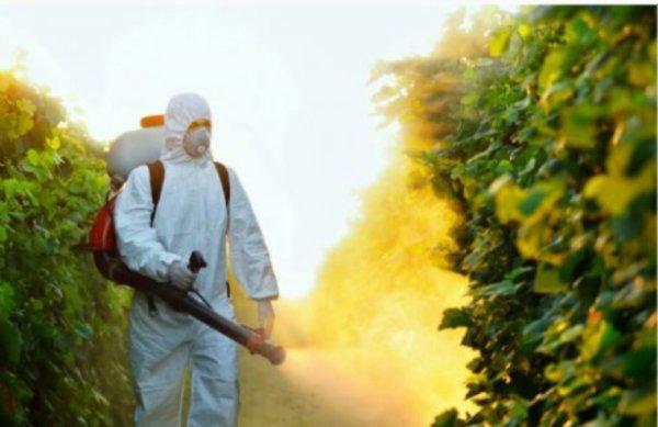 La fin des pesticides de synthèse dans les jardins