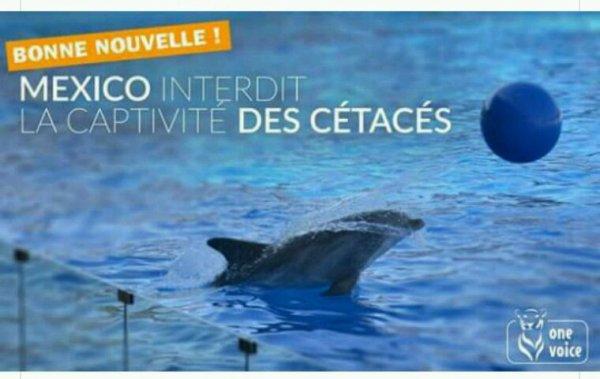 Actualité one voice