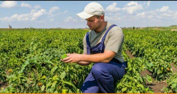 Agriculture bio en France : la consommation explose… et l'emploi aussi !