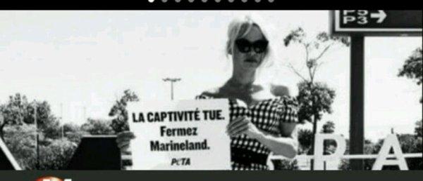 Pamela Anderson dénonce la captivité des animaux devant le Marineland d'Antibes et demande sa fermeture - Regardez