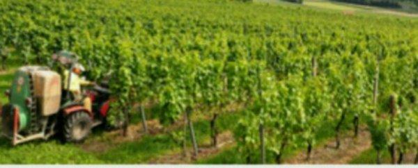 Epandage de pesticides près d'une école: non-lieu pour les exploitants viticoles