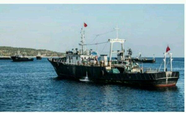 SeaShepherd répond au ministre du Timor Oriental qui soutient l'extermination des requins