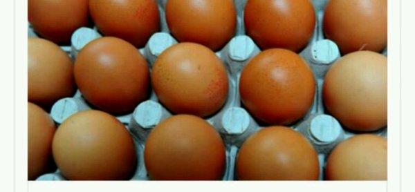 Économie.Nestlé s'engage à ne plus utiliser d'oeufs de poules en batterie