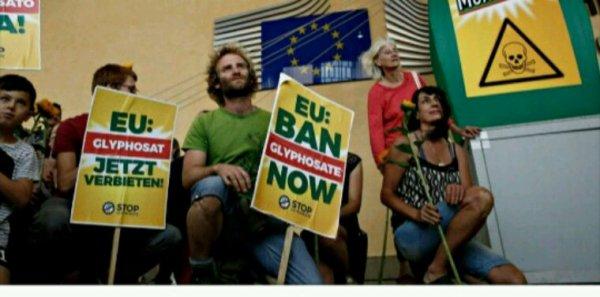 """Glyphosate : l'Europe accusée d'avoir mené des évaluations """"biaisées"""""""