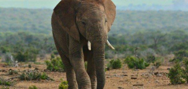 Dans le Limousin, un couple s'apprête à ouvrir le premier refuge pour éléphants d'Europe.