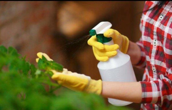 Face à Monsanto, des Français dégainent le Beloukha : un désherbant redoutable… et 100% naturel !