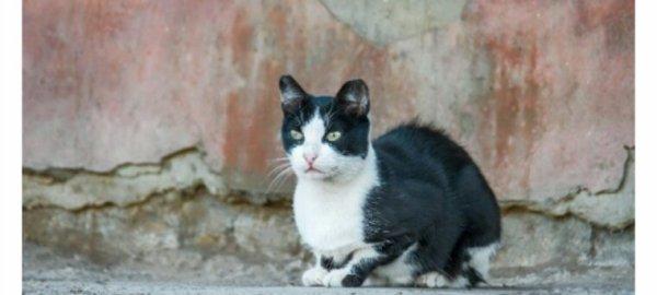 Horrible ! Un chat sauvagement torturé retrouvé mort à Nantes