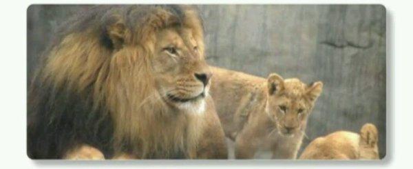 En Roumanie, les animaux sauvages sont désormais interdits dans les cirques sous peines d'amendes très lourdes !