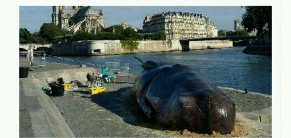 À Paris, une baleine échouée sur les bords de Seine