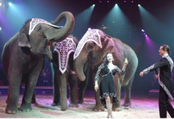 L'Irlande va interdire l'usage d'animaux sauvages dans les spectacles de cirque à partir du 1er janvier 2018