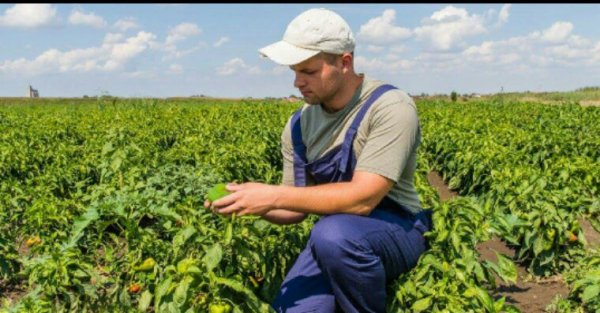 Des milliers d'emplois pour une agriculture sans pesticides