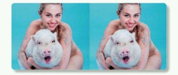 Miley Cyrus promet d'être végane à vie en se tatouant arbore un tournesol à l'intérieur du bras gauche