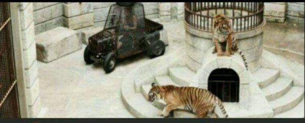 """EXCLU - L'association de défense des animaux PETA demande à France 2 de cesser d'utiliser des tigres dans """"Fort Boyard"""""""