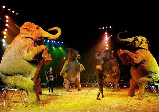 les aniamaux de cirque vont ils disparaitre?