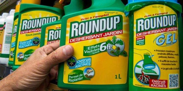 Le glyphosate pesticide roi , à l heure du verdict