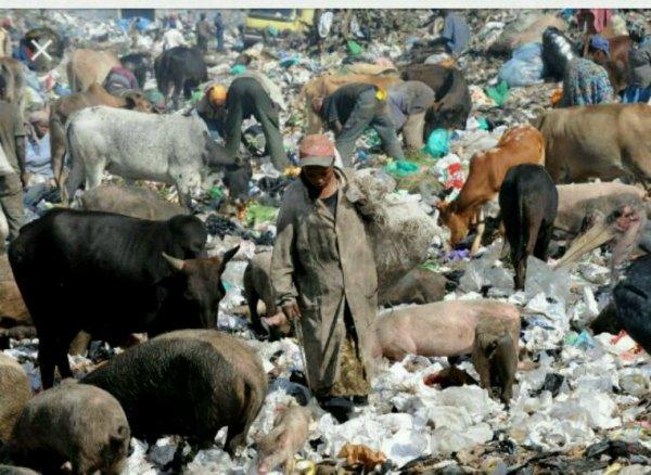Kenya.Le sac plastique à la poubelle