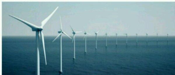 Mer du Nord : poissons, moules et crabes investissent les parcs éoliens