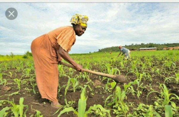 Agriculture: le Congo se met de plus en plus au bio