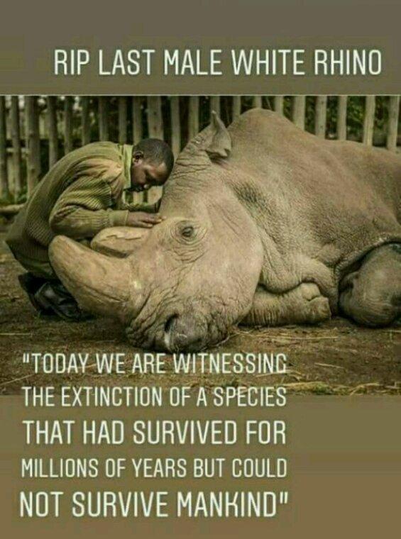 mort du dernier rhinocéros blanc