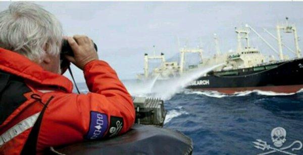La guerre des baleines continue