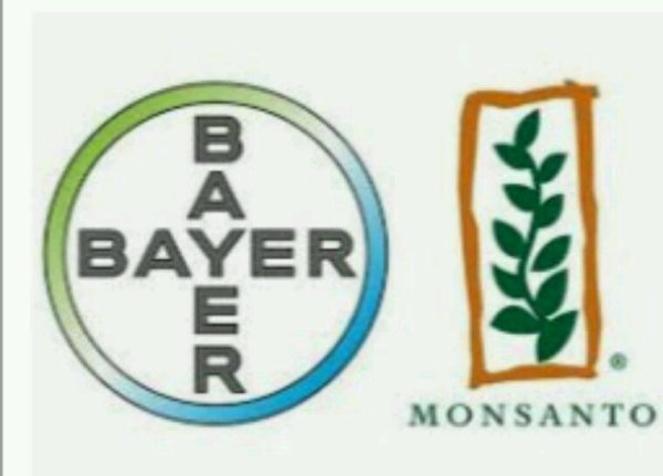 Le glyphosate autorisé pour cinq années de plus : un sursis arraché par Monsanto, Bayer & Co. qui scandalise les ONG