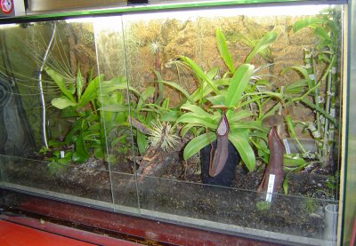 terrarium plantes carnivores de patty. Black Bedroom Furniture Sets. Home Design Ideas