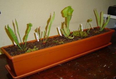 plante carnivore jardiniere