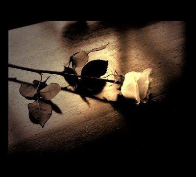 une rose .....