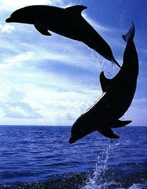 les dofin