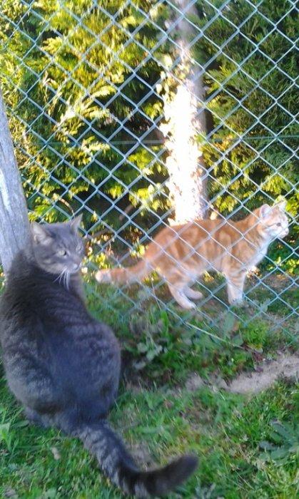 passions chat simon et metisse**
