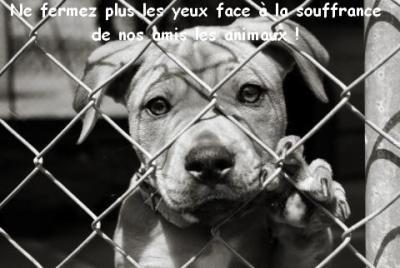 non a la maltraitance envers les animaux