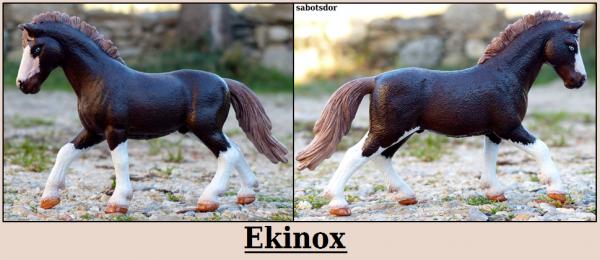 Rockstar • Ekinox
