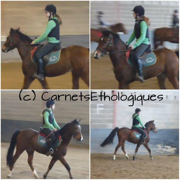 Mes Cours d'Equitation ♥ (partie 3)