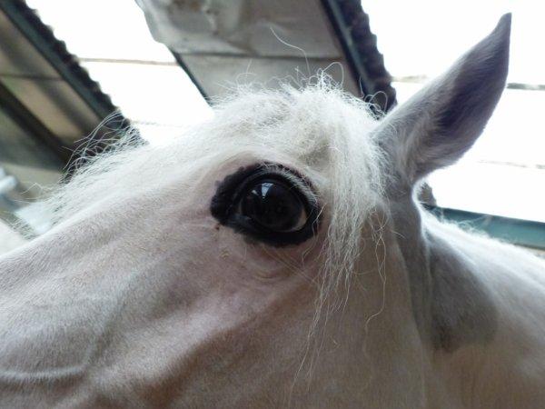 Cours d'Equitation - 13.09.14