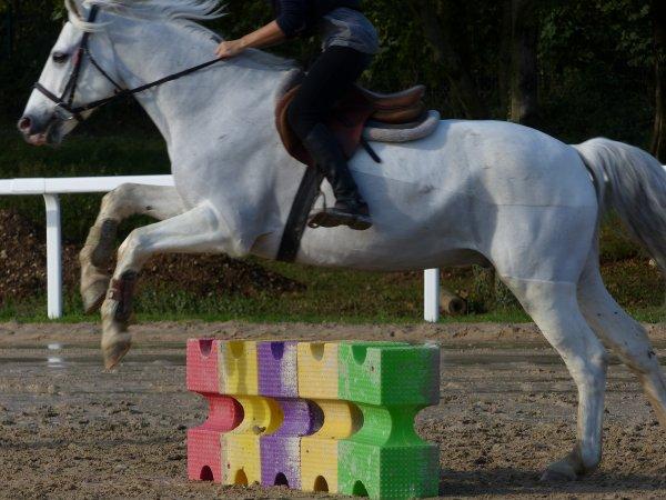 Cours d'Equitation - 11.10.14