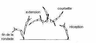 Sol : Comment réussir un salto arrière tendu ?