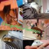 love-gerbilles-hamsters