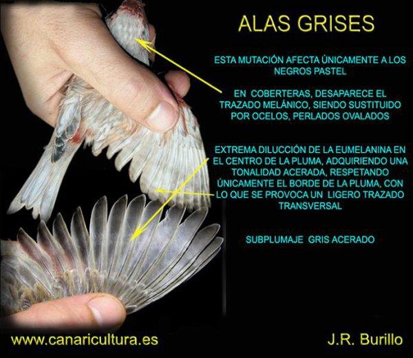 EL ALA GRIS CON SU GRAN DIFICULTAD OXIDACION Y DILUCION