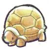 Basilic-ma-tortue