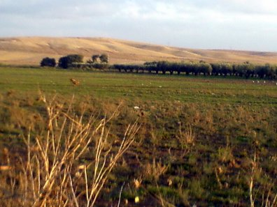 SIDI BRAHIM : Quand la Mekerra était une Rivière
