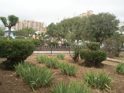 Sidi Bel Abbès : Le boulevard de la Macta et le Ptit Vichy. Mai 2013