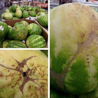 Comment choisir la pastèque parfaite: des conseils d'un fermier expérimenté