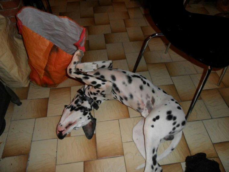 Mes anciens chien je vous aimerais toujours :'(