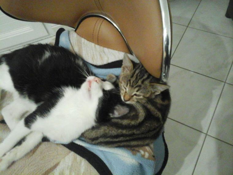 Lucky mon nouveau chaton