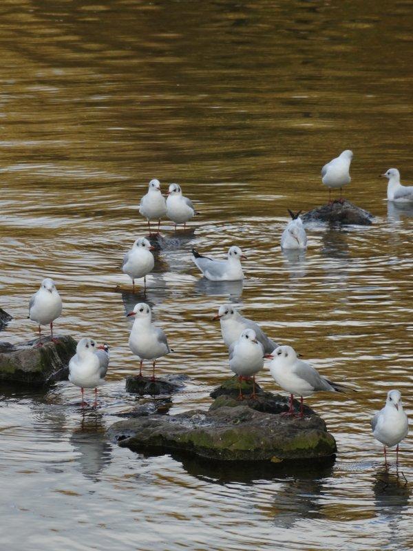 Au royaume des oiseaux....des promeneurs.