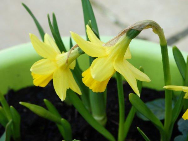 Depuis ce 20 mars, c'est le printemps.
