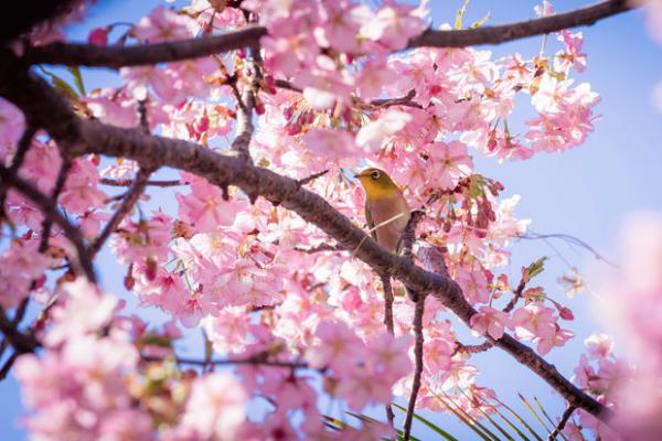Observer les oiseaux est bon pour le moral